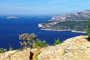 thumb_Ciste-cotonneux-en-fleurs-au-bord-des-falaises-Soubeyranes2C-face-a-la-baie-de-Cassis-et-aux-calanques